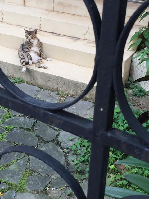 拍攝時遇到小貓咪