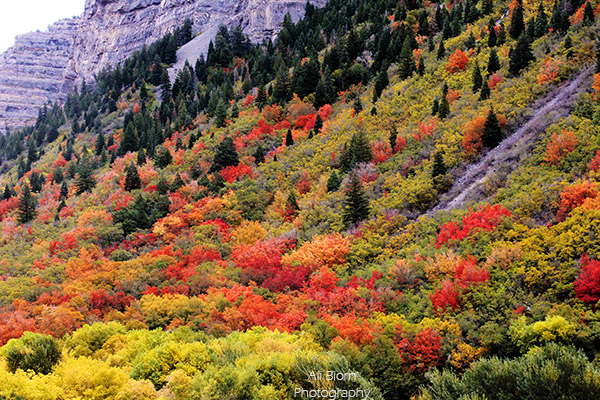 fall colored trees in Provo Canyon