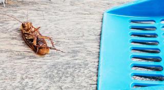 طرق للتخلص من الصراصير في المنزل