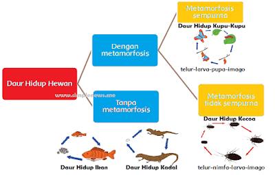 peta pikiran Daur Hidup Hewan www.simplenews.me