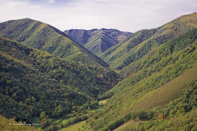 Bosque de Muniellos, por El Guisante Verde Project