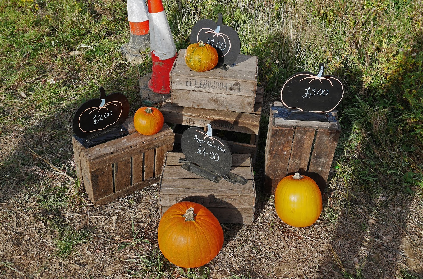 Pumpkin prices at the Sevington pumpkin patch, Ashford