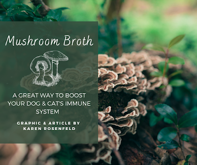 Mushroom broth recipe for dogs and cats, a great way to boost the immune system