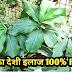 इंसुलिन के पौधे को गमले में उगाने की पूरी जानकारी