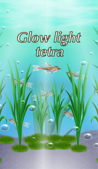 Glow light tetra.