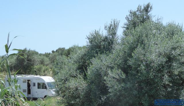 Autocaravana entre oliveres