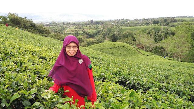 green wisata kebun teh kabawetan bengkulu