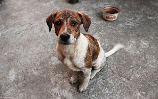 У Чернігові мають розпочати будівництво притулку для тварин
