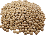 Nutritious Soyabean is the richest source of Vegan protein and Milk