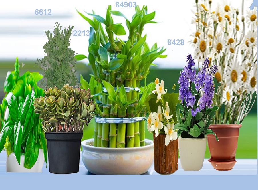 Las plantas que atraen suerte dinero y prosperidad gana for Armonia en el hogar decoracion