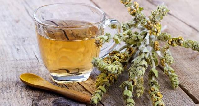 Τσάι του βουνού: Οι θαυμάσιες ιδιότητες του ελληνικού βοτάνου