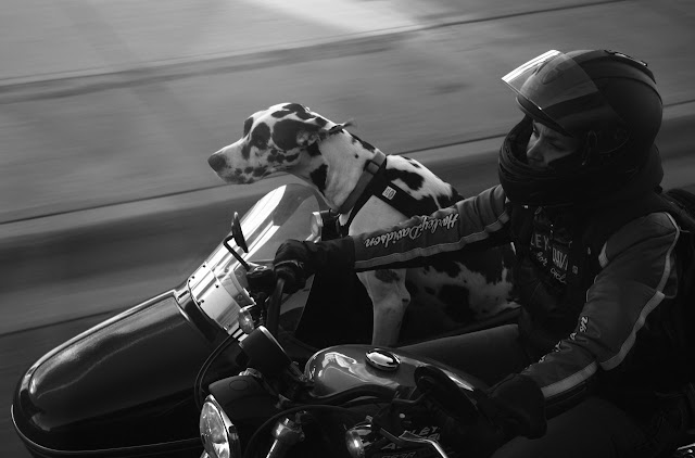 Sidecar Dog