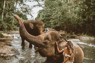 dream about an elephant meaning