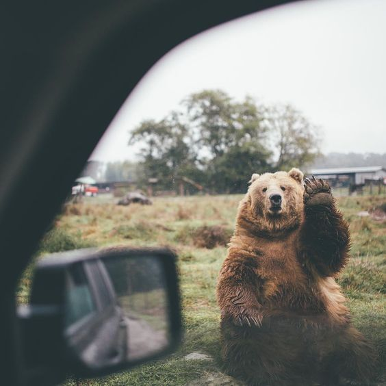 Funny Waving Bear Joke Picture