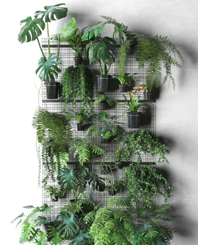 mur de plantes vertes urban jungle