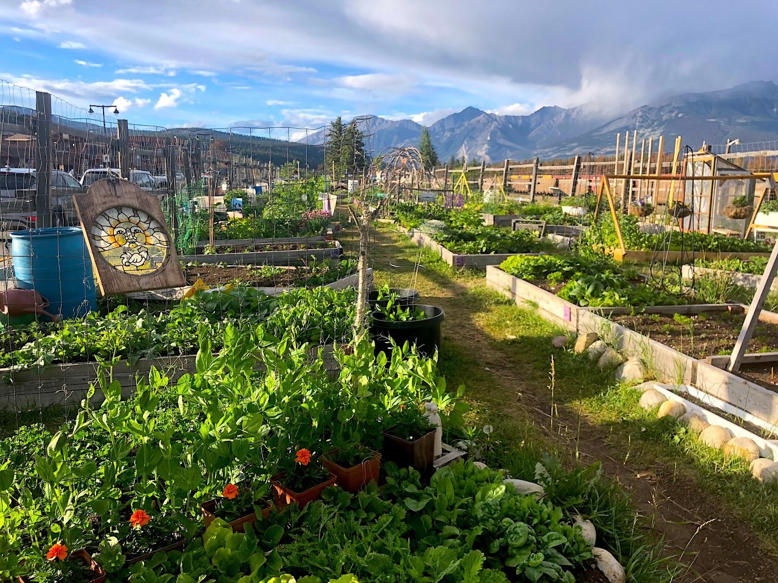 Community Garden Jasper
