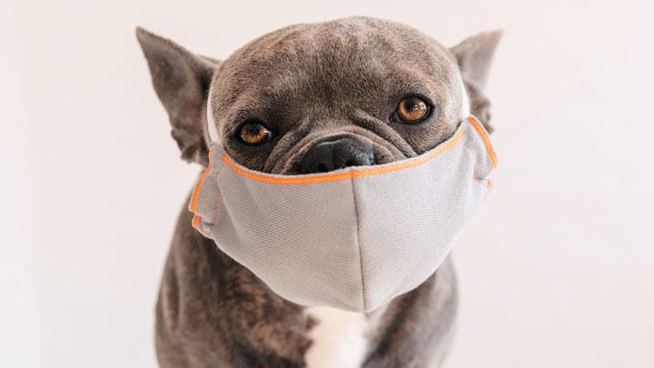 kennel cough symptoms