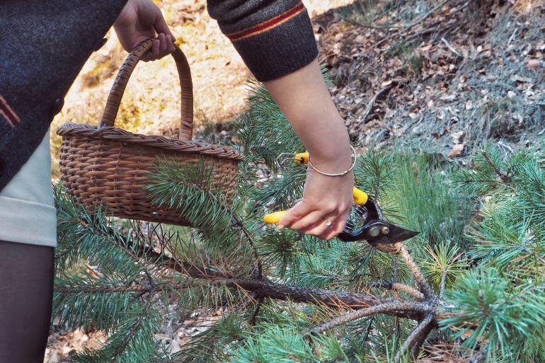 Branches de sapin pour décoration d'automne