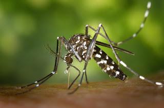 2 Hal Ini Dapat Membuat Nyamuk Bersarang di Rumah Anda