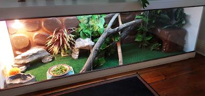 Bearded dragon cage setup