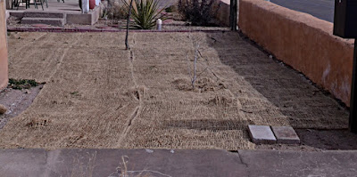 will grass seed grow if not covered, will grass seed grow on top of soil, do you have to cover grass seed, lawn seed cover, grass seed cover, can i just throw grass seed down, lawn seed coverage, help grass seed grow, throw and grow grass seed, does grass seed need to be covered, grass seed covers, mulch to cover grass seed, best way to cover grass seed, cover grass seed with soil, straw mulch for grass seed, how to spread grass seed, how to sow grass seed, lawn grass seeders, planting new grass seed, how to grow a lawn from seed, grow new grass, what is the best way to plant grass seed, growing a lawn from seed,