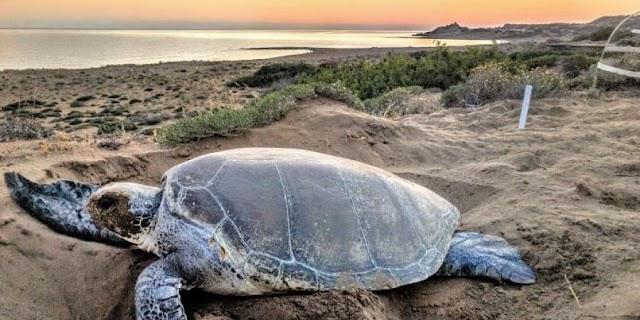 Στην κατεχόμενη Κερύνεια και το πρόγραμμα προστασίας χελωνών ο Στίβεν Λίλι