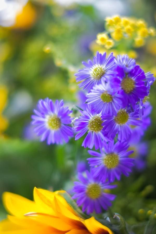 Pretty Purple & Yellow Flowers - Favorite Photoz