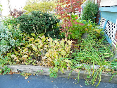 Toronto Fall Cleanup in a Lawrence and Yonge Front Yard before by Paul Jung Gardening Services