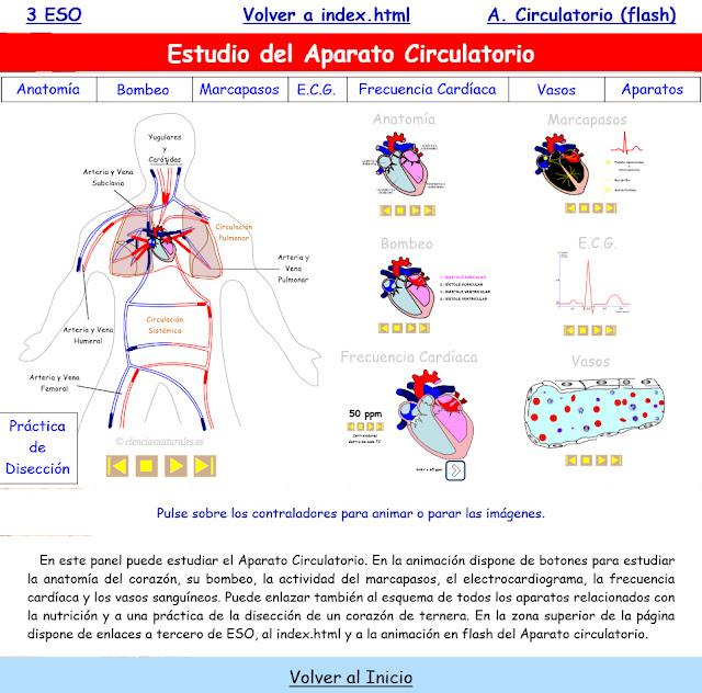 Estudio del Aparato Circulatorio (actualización)