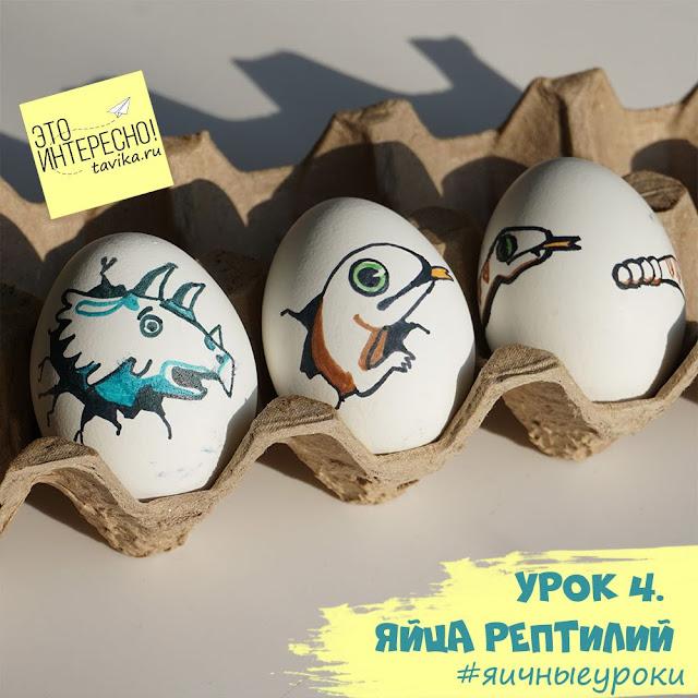 чем яйца рептилий отличаются от птиц