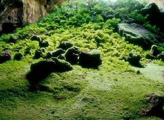 Juegos de Escape - Abandoned Cave Garden Escape