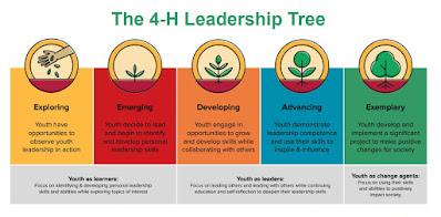 The 4-H Leadership Tree