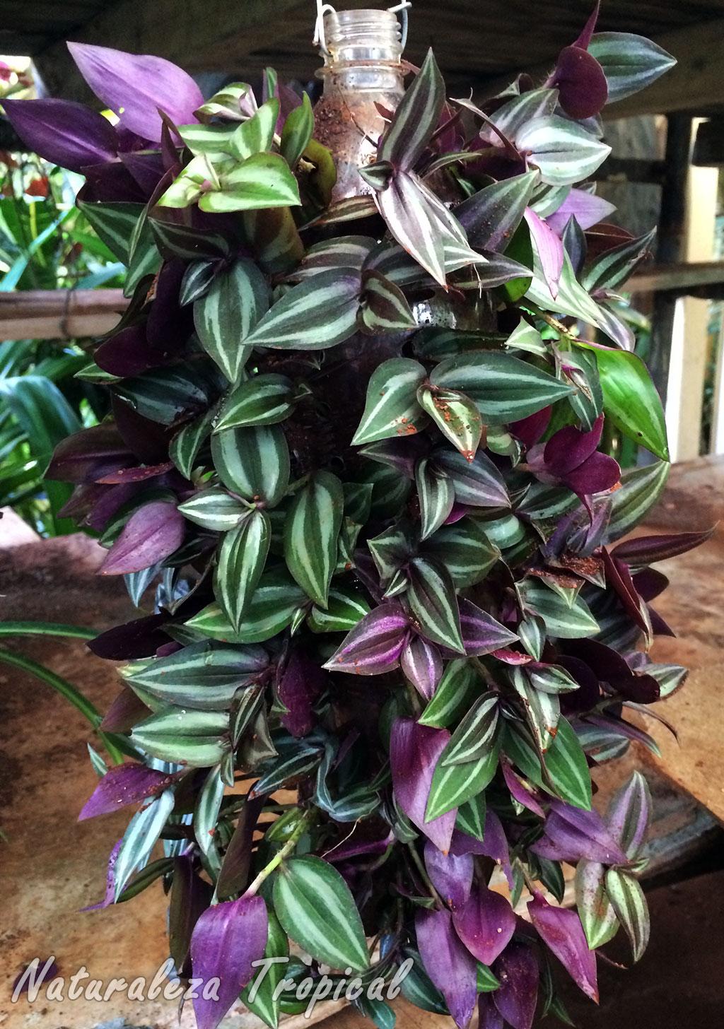 Naturaleza tropical elabora un jard n vertical con una for Piedrecillas para jardin