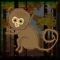 G2J Pygmy Marmoset Escape