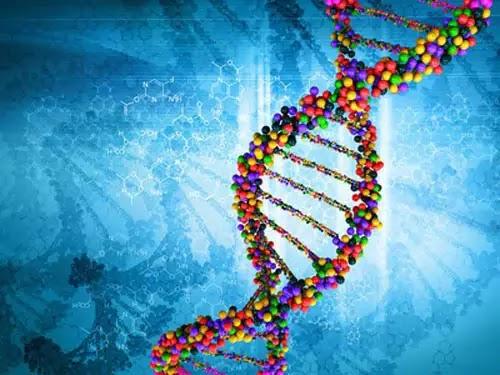 Cientistas sequenciam 64 genomas humanos como nova referência para diversidade genética