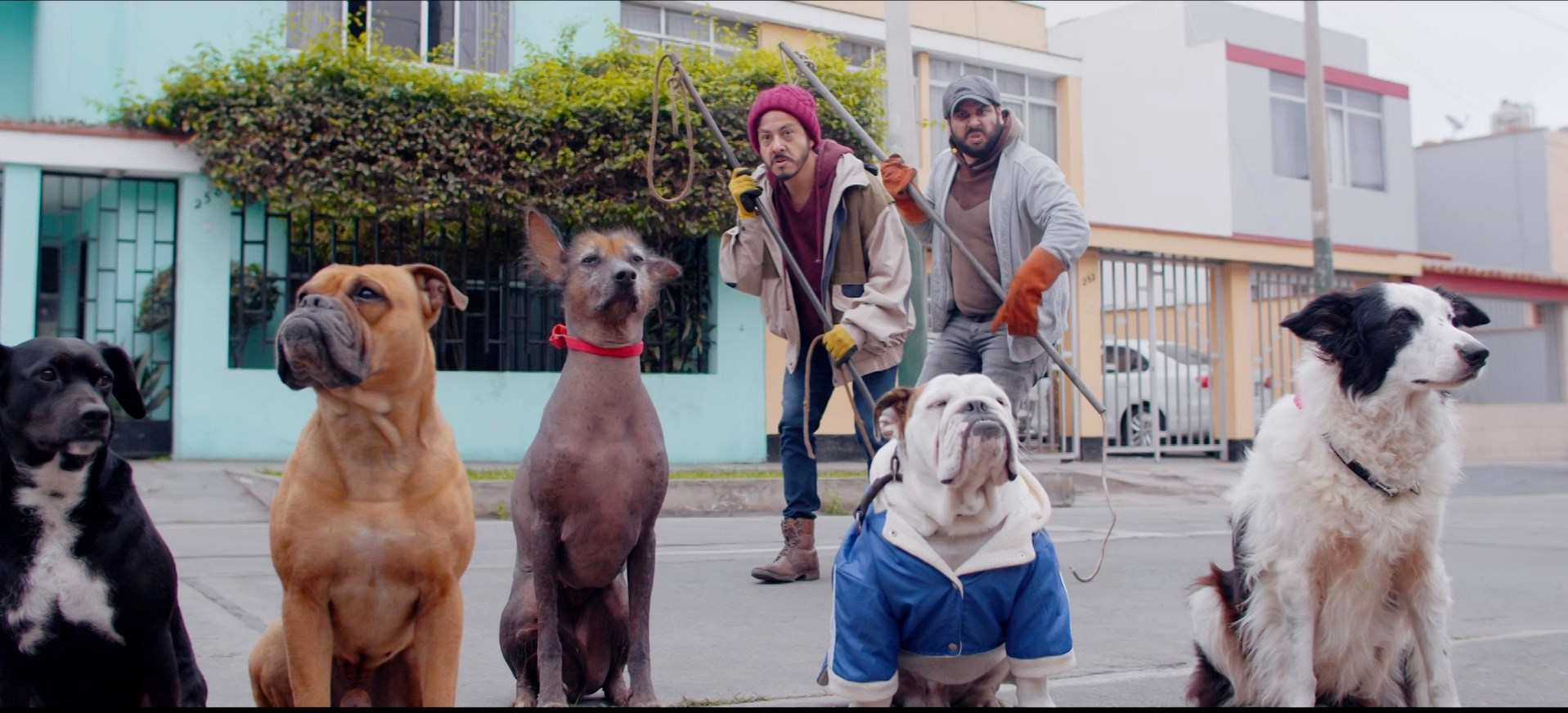 De patitas a la calle (2020) 1080p WEB-DL AMZN Latino