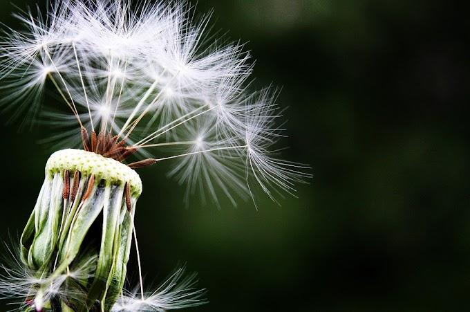 Alergias: ¿medicamento alopático o medicamento natural?