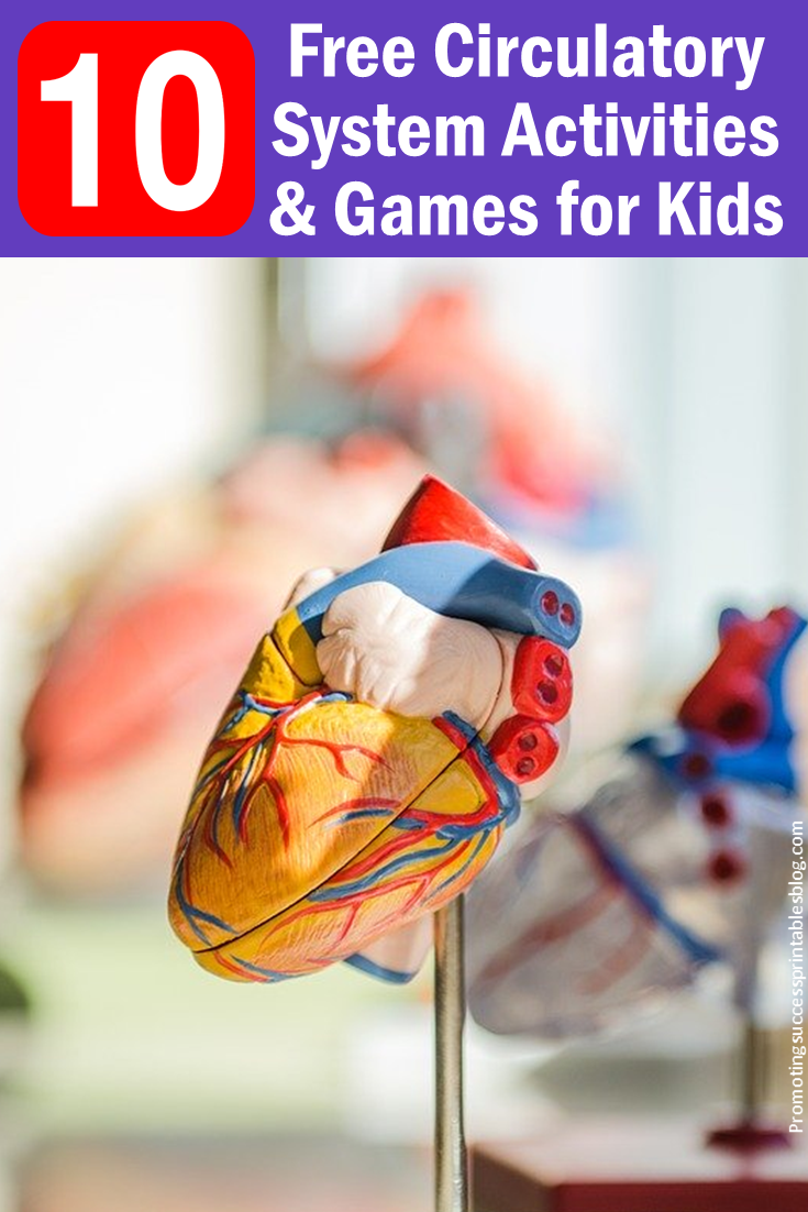 medium resolution of Promoting Success: 10 Circulatory System Activities and Projects for Kids