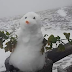 Αντε καλό χειμώνα: ο πρώτος χιονάνθρωπος της σεζόν στα 2697 μέτρα!