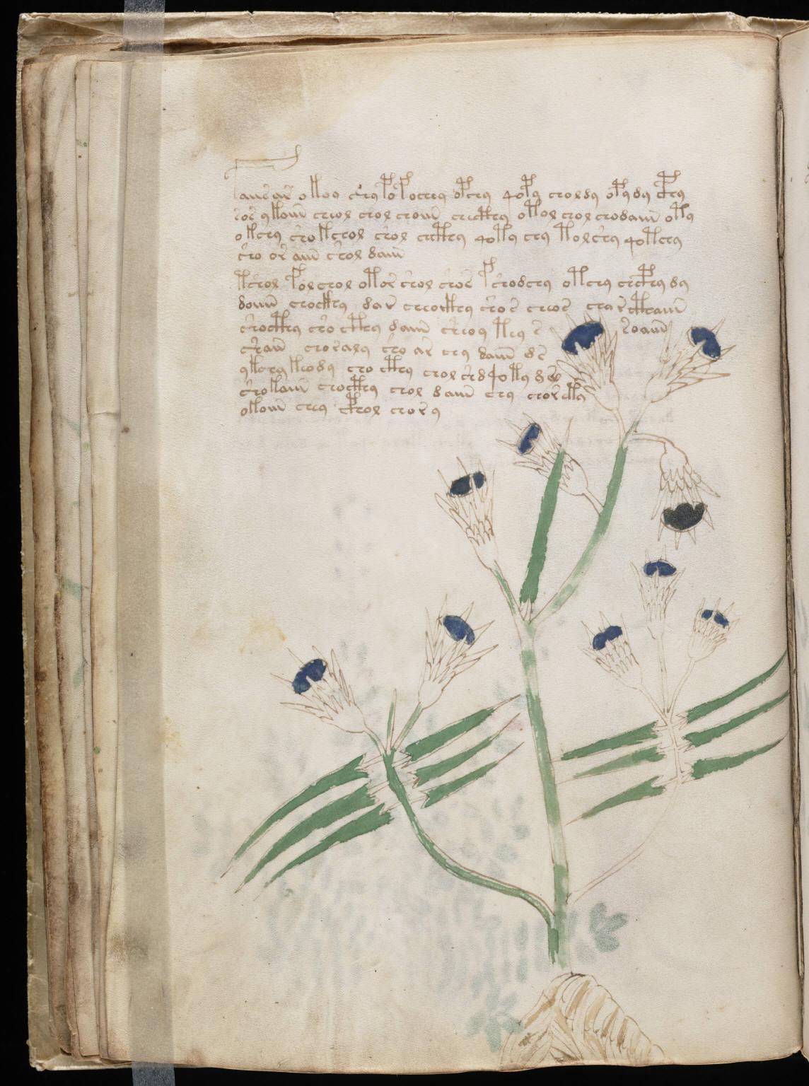 manuscrito040