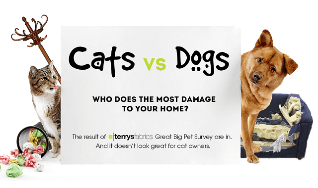 Cats vs Dogs: Who Does the Most Damage to Your Home?