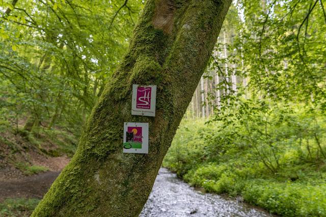 Saar-Hunsrück-Steig Etappe 20 Von Mörsdorf nach Kastellaun  Hängebrücke Geierlay Wandern im Hunsrück Traumschleifen-Hunsrück 09