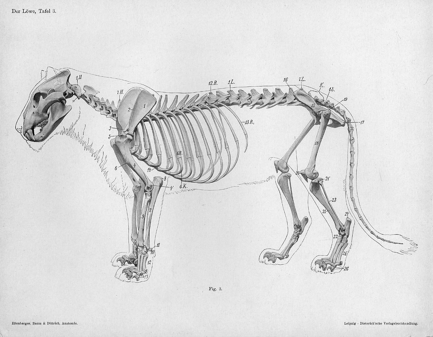 Animal Anatomy Anatomy And Cat: Character And Creature Design Notes: Proper Use Of