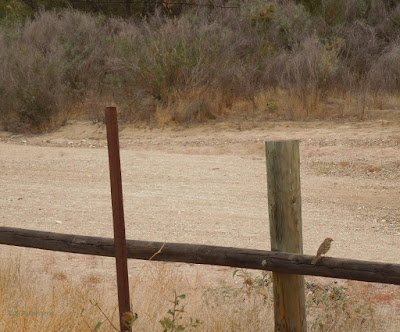 Lone Bird Beside Salinas Riverbed in Paso Robles, © B. Radisavljevic