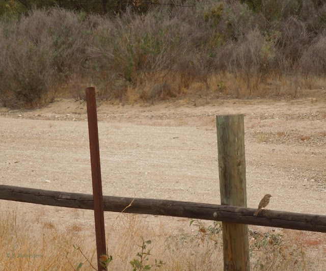 Just a Single Bird -- or Two in Paso Robles
