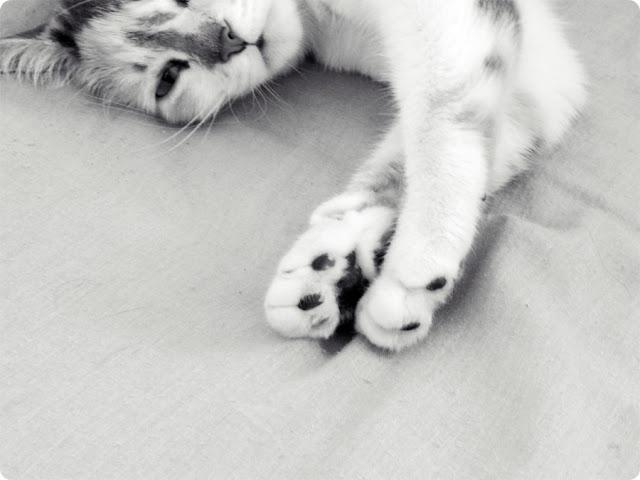 gatinho, gato fofo, gato com instagram, gato blog, gatinha cherry