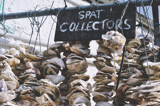 Oyster spat collectors