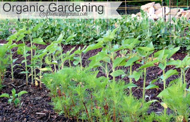 gardening-jemma