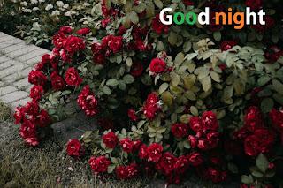 good night rose love
