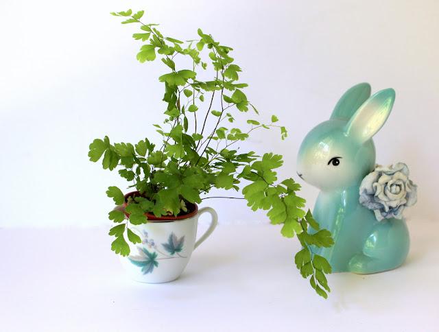 Indoor plants in blue vintage planters